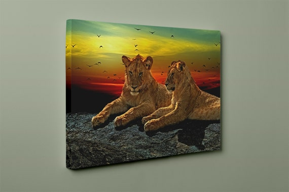 Young Male Lions Mirror Wrapped Premium Canvas
