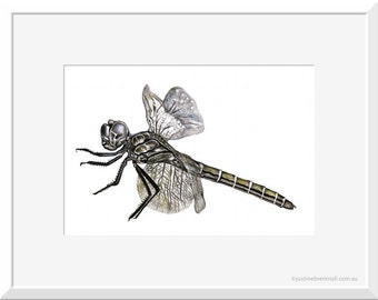 Dragonfly Print, Art, Wall Art Prints, Black and White Print, Dragonfly Decor, Matted Prints, Pencil Drawing, Dragonflies