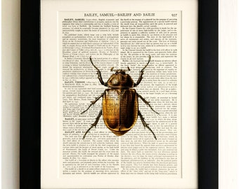 ART PRINT on old antique book page - Insect, Brown Beetle, Vintage Upcycled Wall Art Print, Encyclopaedia Dictionary Page, Fab Gift!