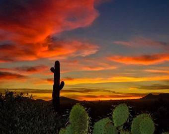 Sonoran Desert Sunset Sunrise Landscape Nature Arizona Saguaro Cactus Cacti Silhouette Southwest Photography Large Wall Decor Fine Art Gift
