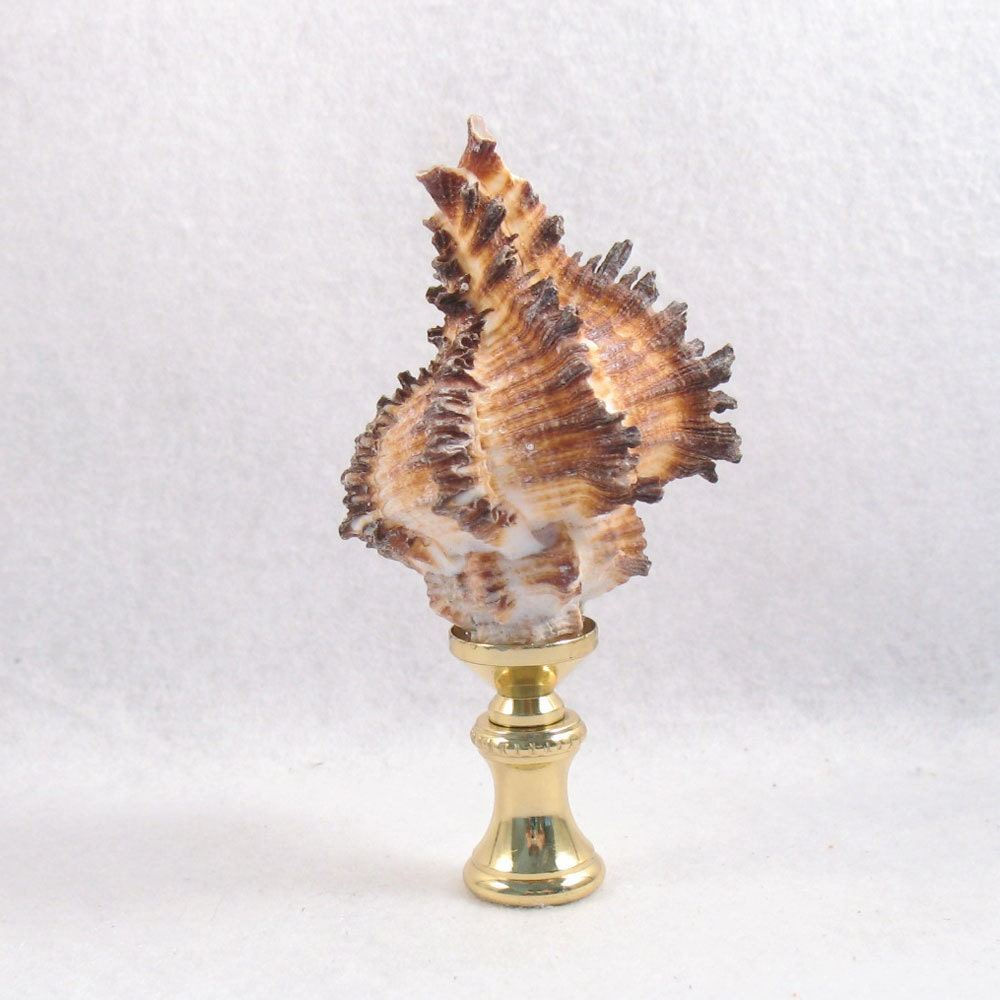 lamp finial real shell brown tan white fresh from the. Black Bedroom Furniture Sets. Home Design Ideas
