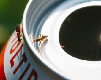 Ants on a Can