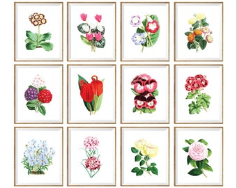 Floral Art Print SET of 12. Flowers print set, 8x10 flower prints, 11x14 flower prints, bright flower prints, botanical prints set, A4, wall