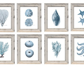 Set of 8 Pale Blue Sealife Prints. 2 Corals 2 Shells 2 Starfish 2 Urchins with Discount on Archival Watercolor Paper.