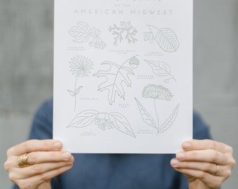 Native Plants of the American Midwest Botanical 8x10 Letterpress Art Print
