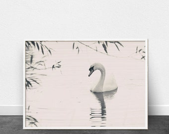Swan Print, Printable Wall Art, Nature Photography, Minimalist Art, Modern Home Decor, Interior Design, Pale Pink, Two Toned Art Print, Swan