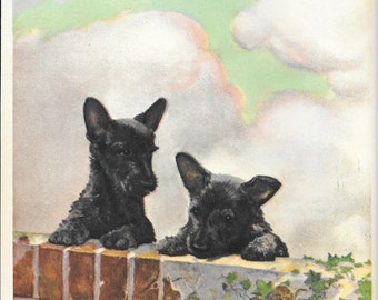 Scotch Terrier Puppies by Diana Thorne, 1932 Art Print