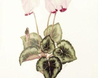 Cyclamen, original watercolour botanic art painting