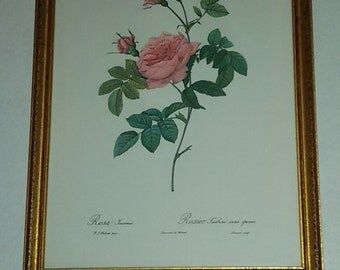 Vintage / Roses of P.J.REDOUTE / burning former printing Rémond