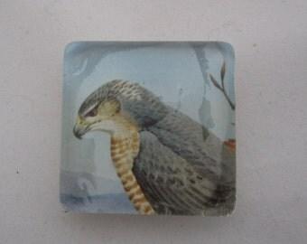 Hawk Tile Magnet