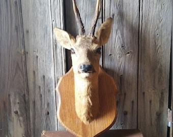 Mounted Animal Head Etsy