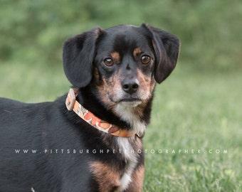 Fall Dog Collar – Fall Watercolor Dog Collar – Fall Leaves Fabric Dog Collar – Fall Leaf Handmade Dog Collar