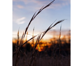 Sunset in Field Photograph Fine Art Photography Nature Print Wall Art Home Decor 4x6 up to 11x14