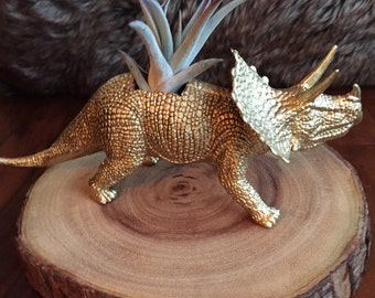 Large gold triceratops dinosaur planter with air plant; desk planter; air plant holder