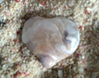 Shell Heart / Clam Shell Heart / Shell / Clam Shell / Clam Shell Piece