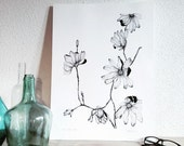 Magnolia - Illustrated botanical displays - flowering plant - original drawing
