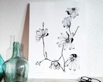 Magnolia - Illustrated botanical displays - flowering plant - original design and single - garden flowers - liliopsida