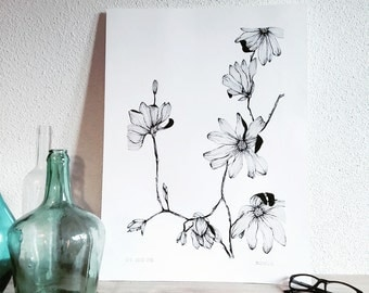 Magnolia - Illustrated botanical displays - flowering plant - original design and single - garden flowers - liliopsida