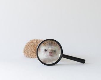 Hi Again - Hedgehog Greeting Card