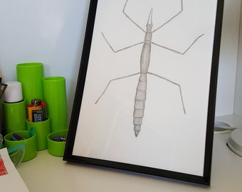 A4 Hand Drawn Stick Insect Print, Scientific Illustration, Entomology