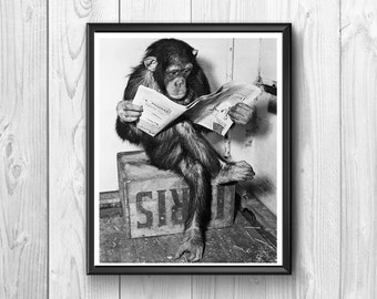 Monkey educated and able to read the newspaper