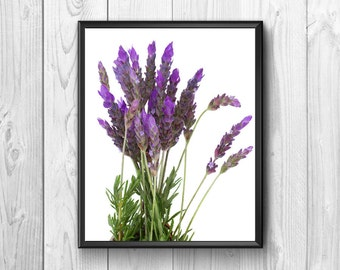 lavender flowers scented, freshly picked in the meadow
