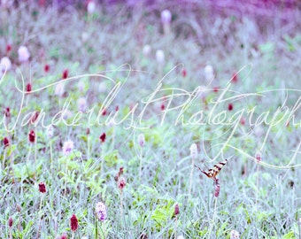 Purple Dragonfly and Clover