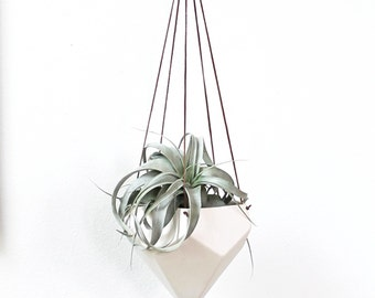 Large Gem Tabletop Air Plant Vase -Plant Included-