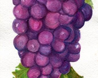 Grapes Watercolor Painting, original watercolor art  5  x 7 purple grapes illustration, fruit watercolors, SharonFosterArt Farmhouse Decor