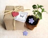 50 Flower Seed Favor Boxes - Plantable Wedding Favors - Confetti Flower Seed Pots - Bridal Shower Favor - Baby Shower Favors Seed Paper Kit