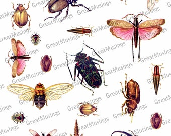 Bugs Insects Digital Collage Sheet Download embellishment images Graphics No.306