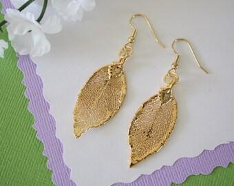 Gold Leaf Earrings, Evergreen Leaf, Real Leaf Earrings, Real Gold Evergreen Leaf, Gold, Nature, LESM117