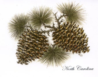 PineCones, North Carolina/Note Cards