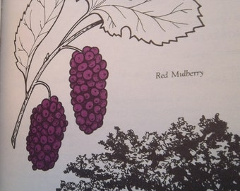 Sale - Vintage - Book - A Field Guide to Berries and Berrylike Fruits by Madeline Angell - 1981 - Paperback