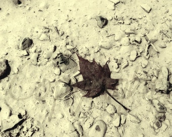 Maple Leaf, Print Photography or Greeting Card, Fall Maple Leaf, Fine Art Photography, Gift Idea, Wall Art, Nature, Woodland