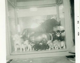 "Vintage Photo ""That's a Bunch of Bull"" Snapshot Antique Photo Black & White Photograph Found Paper Ephemera Vernacular - 171"