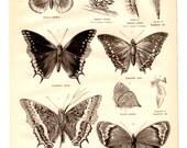 Butterflies Antique Book Plate Print 1878 - Vintage Book Page Illustration Home Decor, Nature,Entomology, Collage, Art, Craft Supplies