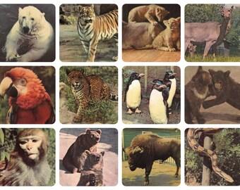 Animals. Photos by Mazelev, Ignatovich. Set of 12 Vintage Postcards - 1960s. Soviet Artist Publ.