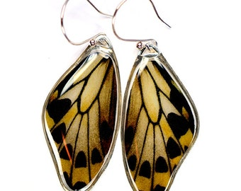 Rare Butterfly Image - Wallace's Golden Birdwing