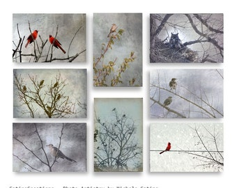 Birds in Trees photo set Cardinals, Great Horned Owl, Mockingbirds, Cedar Waxwings, Winter Grays Monotone Bird print set. Nature Prints