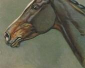 Rivst Braided Bay - Vintage 1940s Artist-signed Horse Postcard