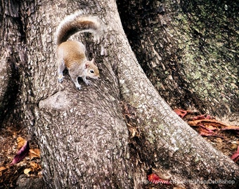 Cute Squirrel On A Tree Trunk -Fine Art Nature Photography Print -Home Decor Wall Art