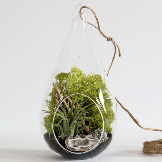 Geode and Pyrite Air Plant Terrarium Kit with Black Sand || Hanging Teardrop