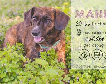 Adoption Profile Overlay Cat Dog Adopt Rescue Shelter Pet Adoption Overlay - Photoshop Template - Photoshop Overlay