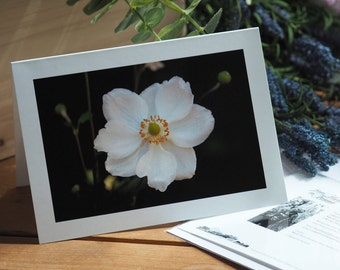 Dramatic Anemone, Marle Place Gardens, Kent. Greetings card, blank inside for your own message.