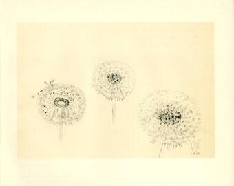 "Charles Burchfield Print. ""Three Dandelion Seed Heads"". 1968."
