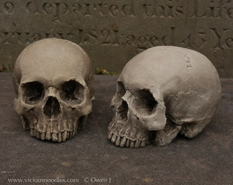Pair of HUMAN SKULL REPLICAS full size realistic replicas made from plaster of Paris and painted for an aged, weathered effect