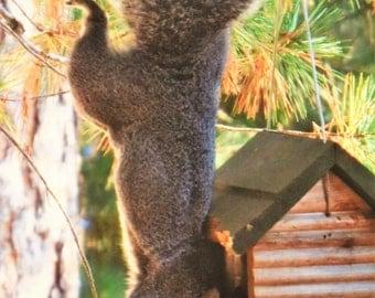 Squirrel Photo; Squirrel Humor; Squirrel Eating Birdseed; Wildlife Print