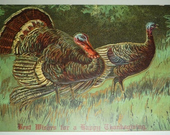 Two Turkeys Walking in the Grass Unused Antique Thanksgiving Postcard