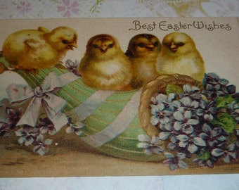 Sweet Chicks and Violets U/S Clapsaddle Antique Easter Postcard